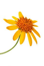 Föreningen har varit med och sponsrat några filmer som ett led i arbetet med att få ut information om homeopati.